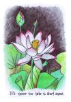 Starting Anew Lotus